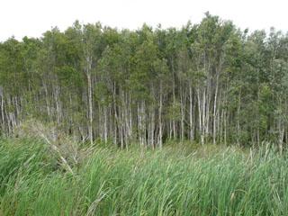 Byron wetland