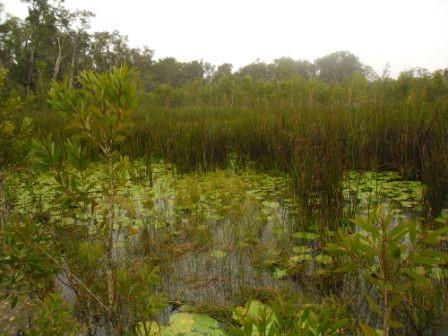 Stormwater wetland