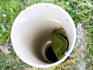 Frog in a pipe on-site sewage