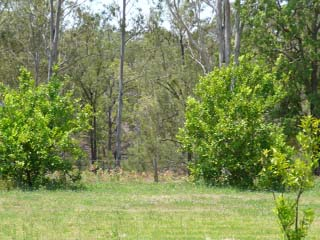 Fruit Tree Mop Crops