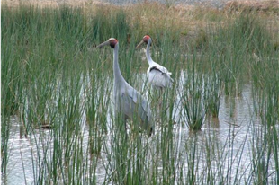 Wetlands attract birds such as Brologas