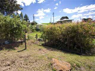 Established wetland on-site sewage